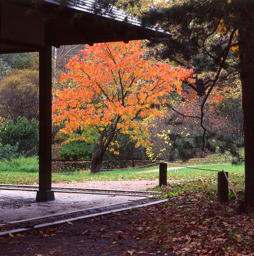 japanese002-1.jpg