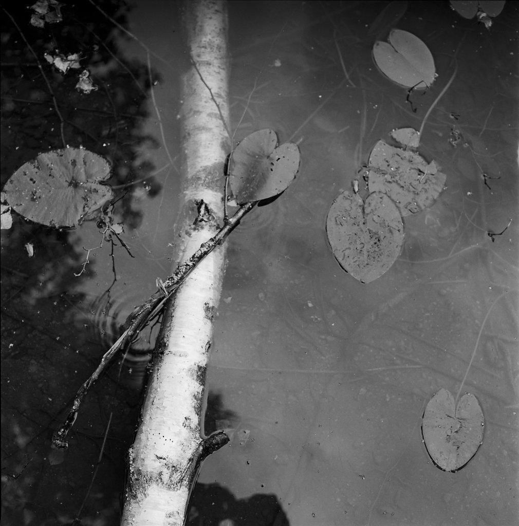lake016-1500.jpg