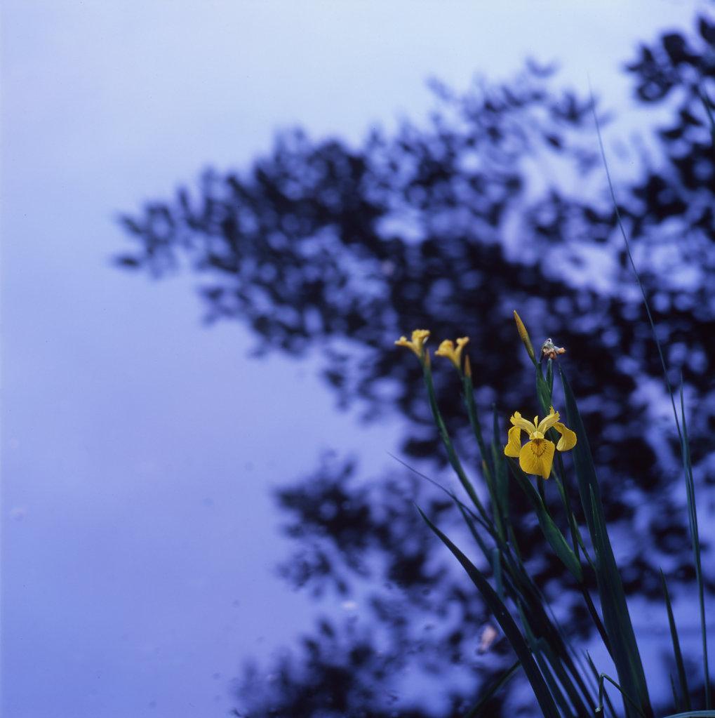 iris007-1500.jpg