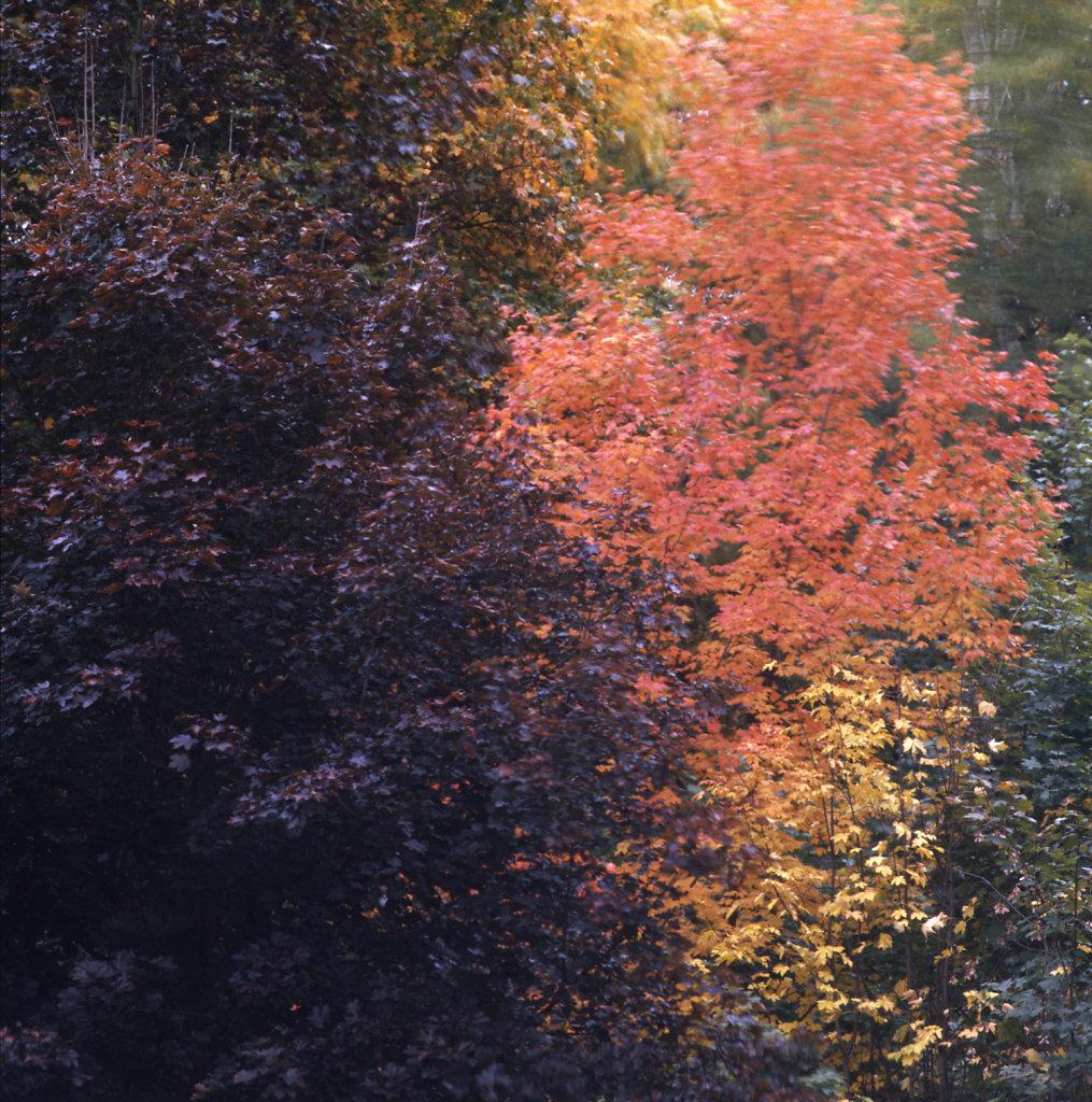 jap-osen14011-1500.jpg